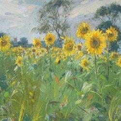 Sunflowers-Misson-Oil-10-x-12